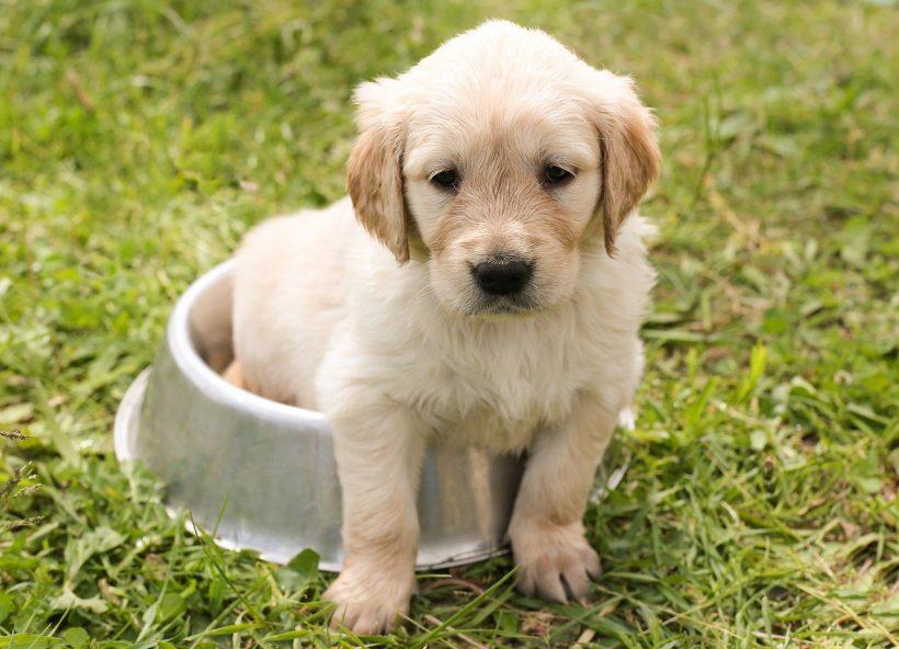 CHEZ SNOOPY : la boutique en ligne pour chiens